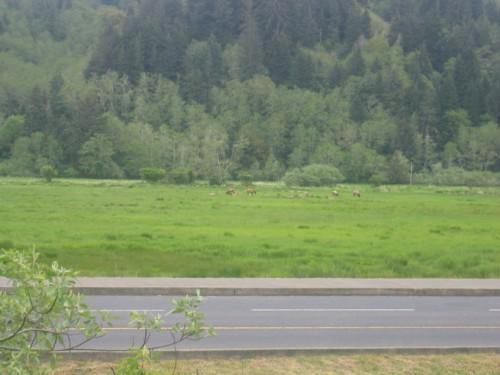 Moose herd